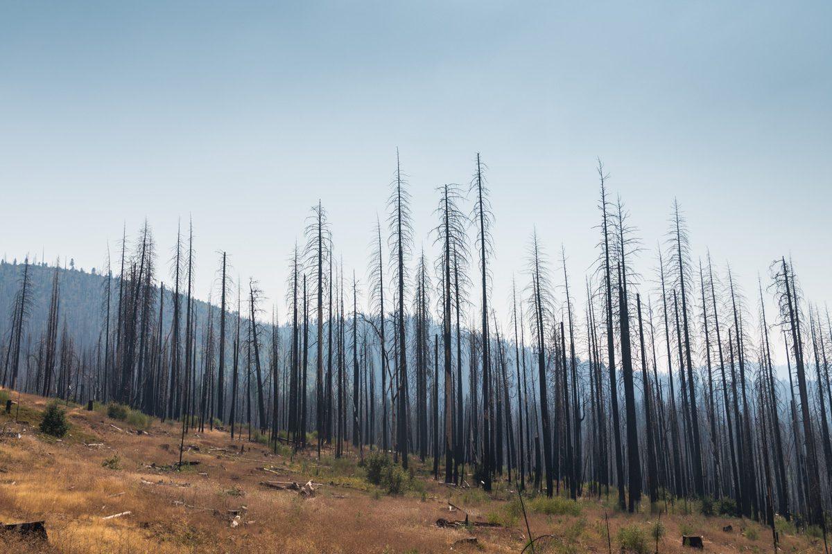 Сгоревшие деревья в национальном парке США